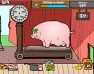 Feed the pig online